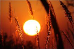 Sonnenaufgang in Xakanaxa