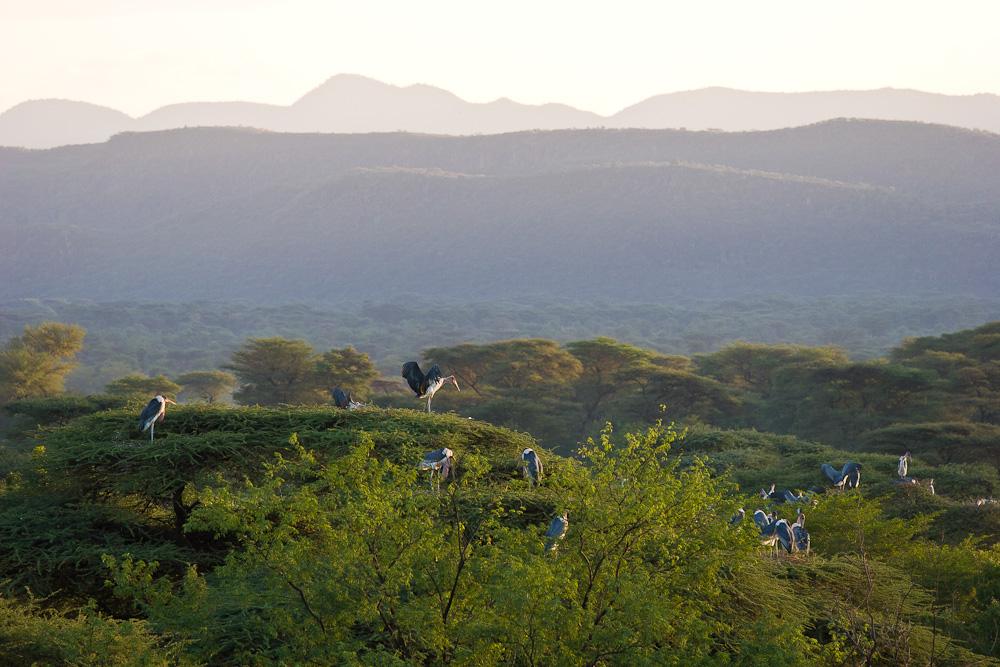 Sonnenaufgang mit den Marabus am Lake Bogoria