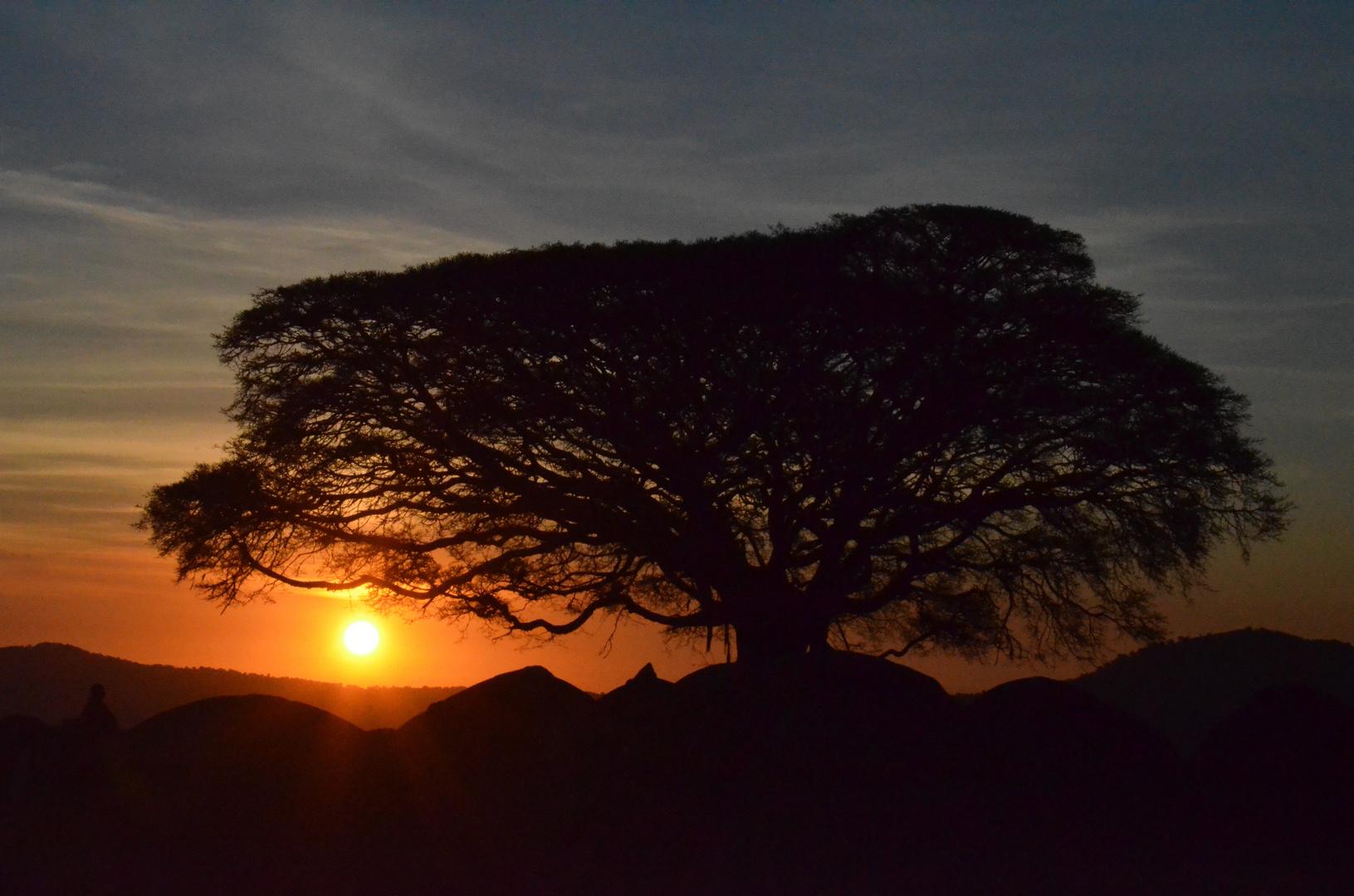Sonnenaufgang Serengeti