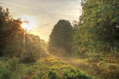 Sonnenaufgang über dem Biotop