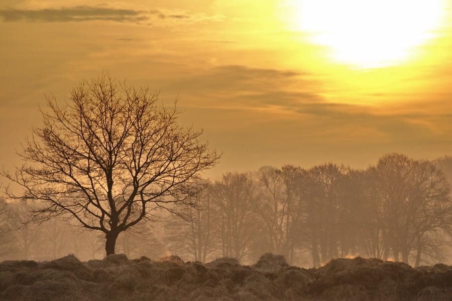 Sonnenaufgang über den Feldern von Isernhagen