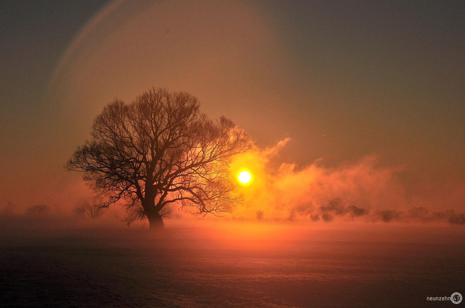Sonnenaufgang über der Donau