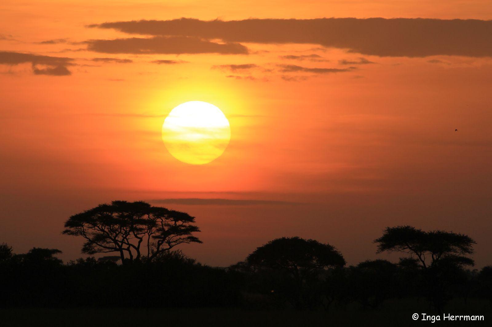 Sonnenaufgang über der Serengeti