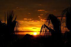 Sonnenaufgang über Palmen, Madeira