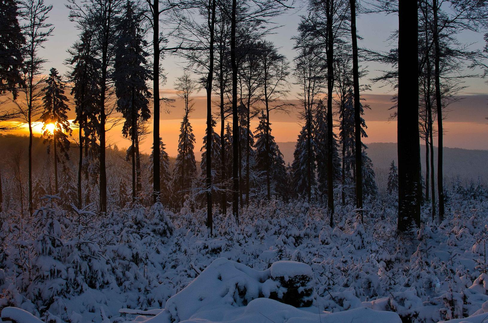 sonnenaufgang und erstes licht im winterwald rothaarkamm. Black Bedroom Furniture Sets. Home Design Ideas