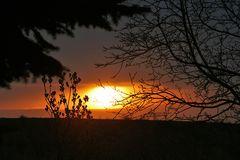 Sonnenaufgang zwischen den Zweigen