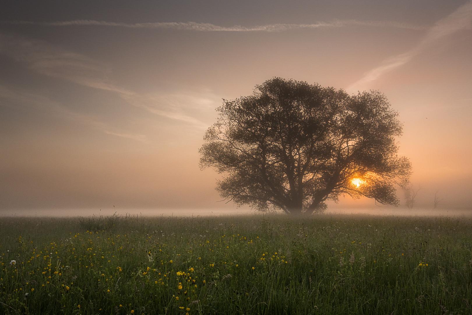 Sonnenaufgang_im_Lahntal (2)