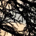 Sonnenaufgangs-Scherenschnitt