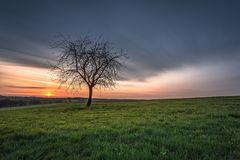 Sonnenaufgangsbaum