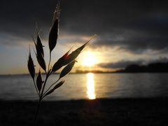 Sonnenaufgangshowstehler