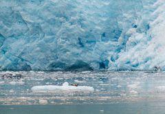 """""""Sonnenbad"""" am Aialik Glacier in Alaska"""