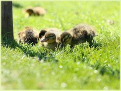 *Sonnenbad im Gras*