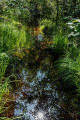 Sonnenbad im Moor