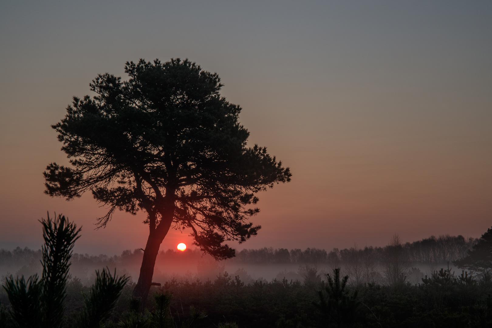 Sonnenbaum .....
