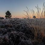 Sonnenbaum durch gefrorene Gräser ...