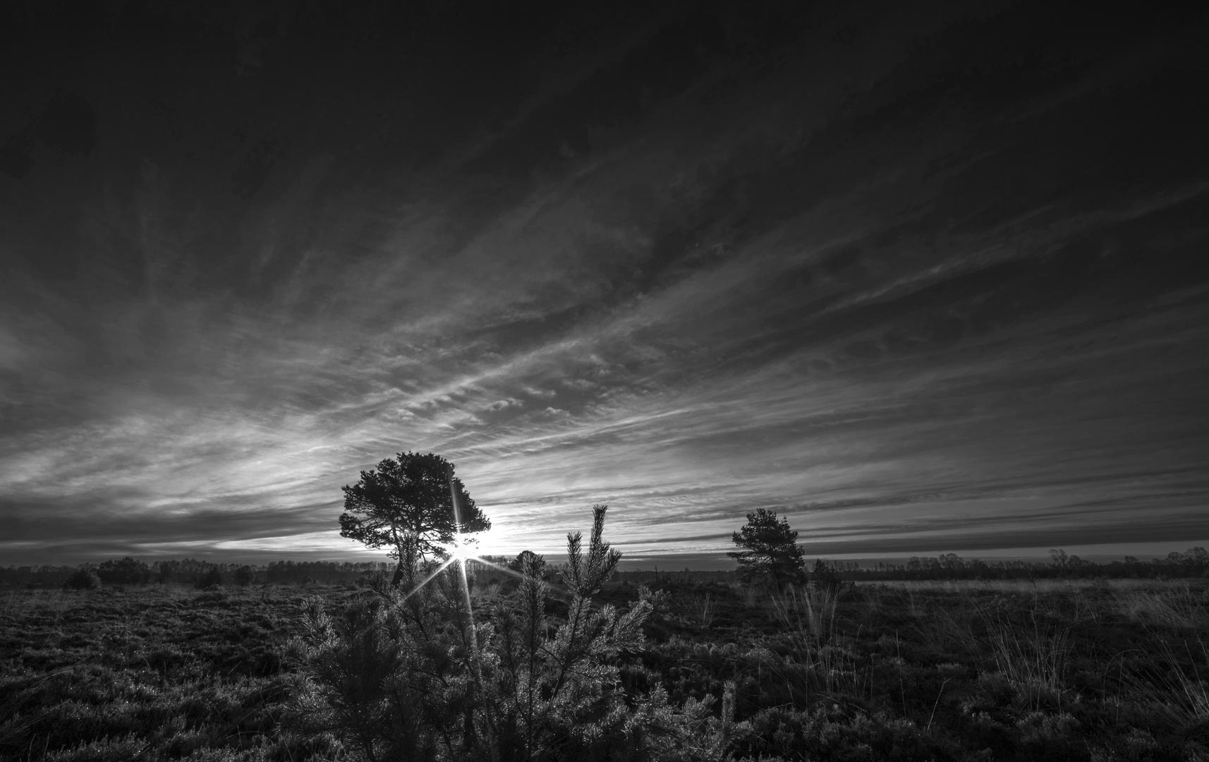 Sonnenbaum mit Stern  - sw -