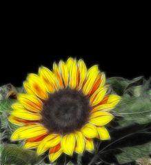 """ Sonnenblume """