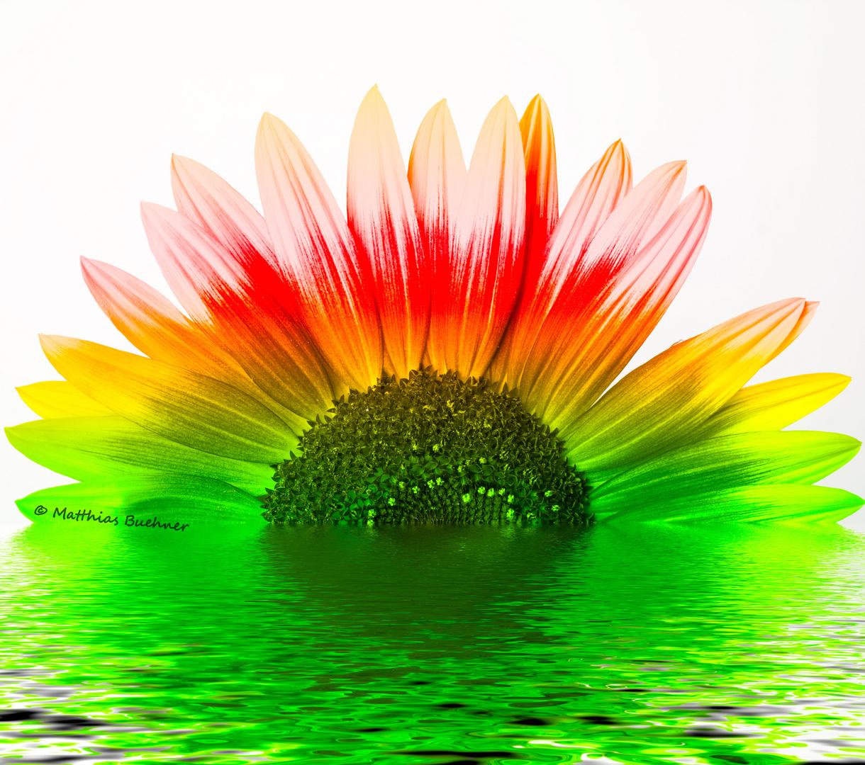 Sonnenblume abstrakt......