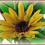 """Sonnenblume  - """"auf Sandstein gemalt"""""""
