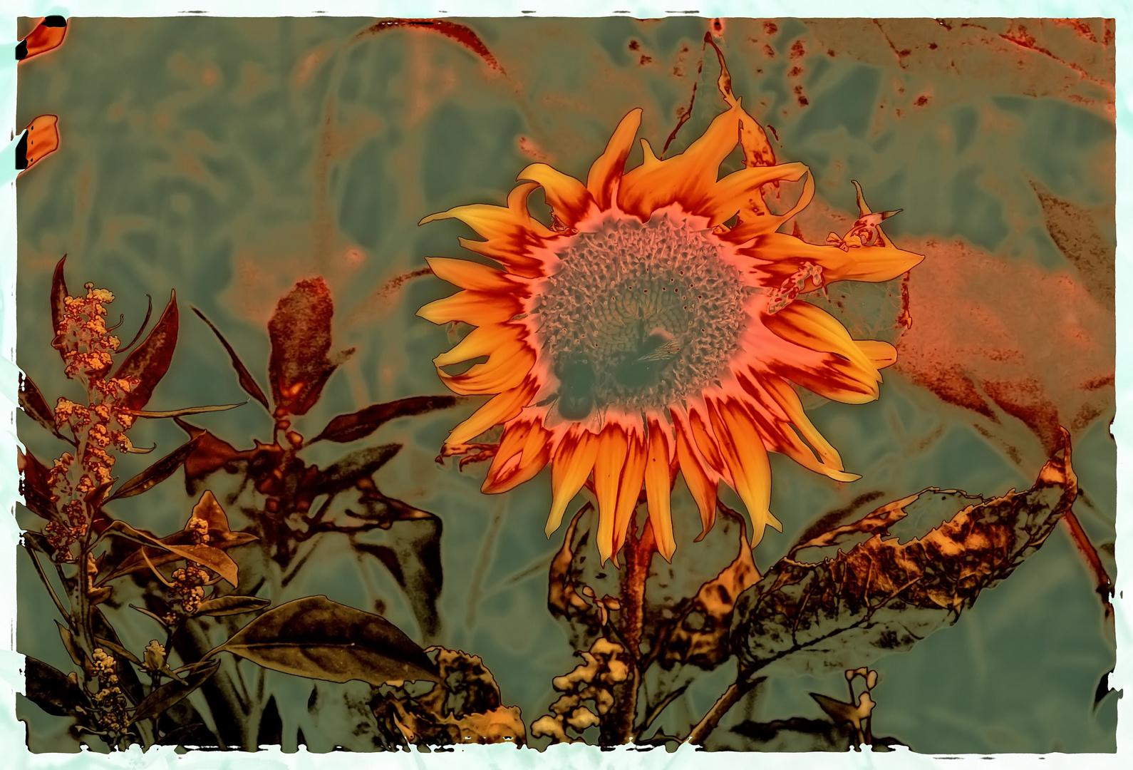 Sonnenblume -Gruß zum Wochenende. - Juli- 2011