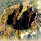 Sonnenblume in Bedrängnis