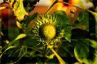 - Sonnenblume in Grün 1 -