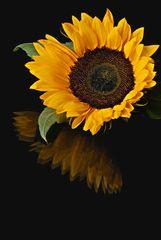 Sonnenblume mit Abbild