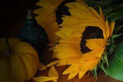 Sonnenblume mit Kürbis