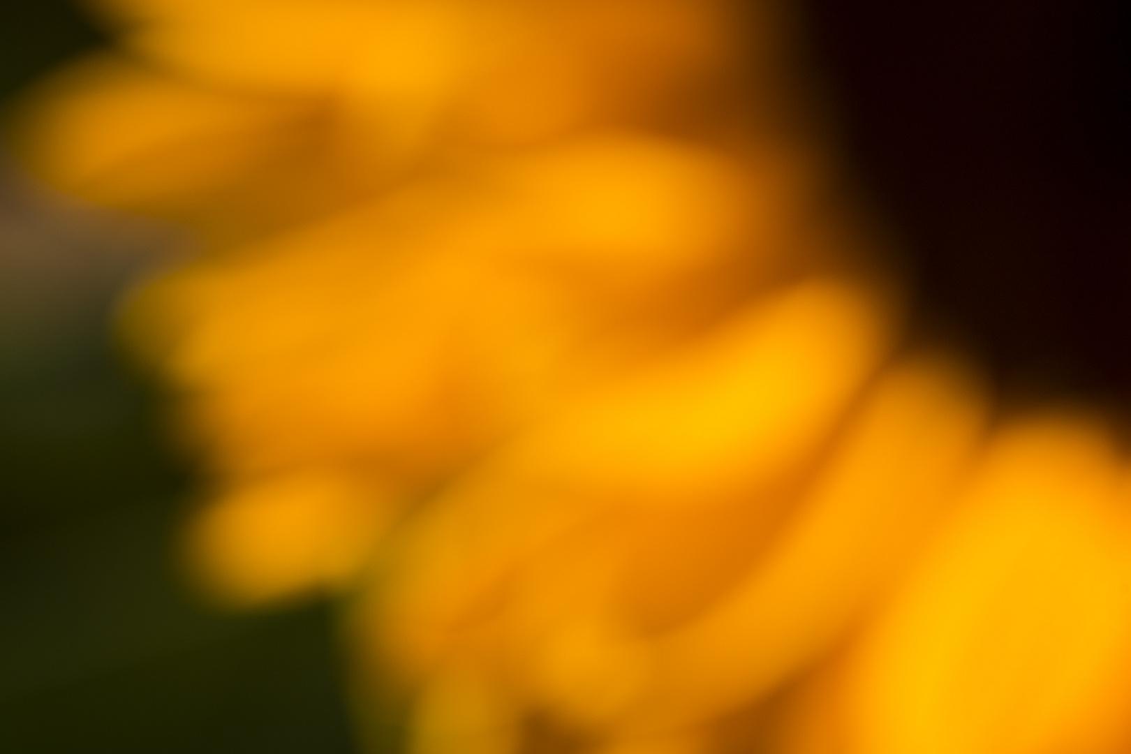 Sonnenblume_Herbst_Tabletop