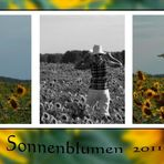 Sonnenblumen 2011