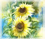 Sonnenblumen als Gruß!