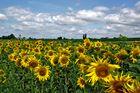 Sonnenblumen für Euch alle