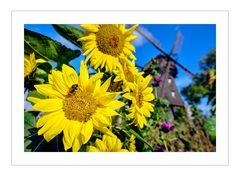 Sonnenblumen, Hummeln & Gedöhns