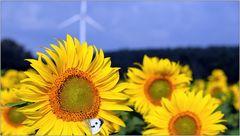 ... Sonnenblumen mit Windantrieb ...