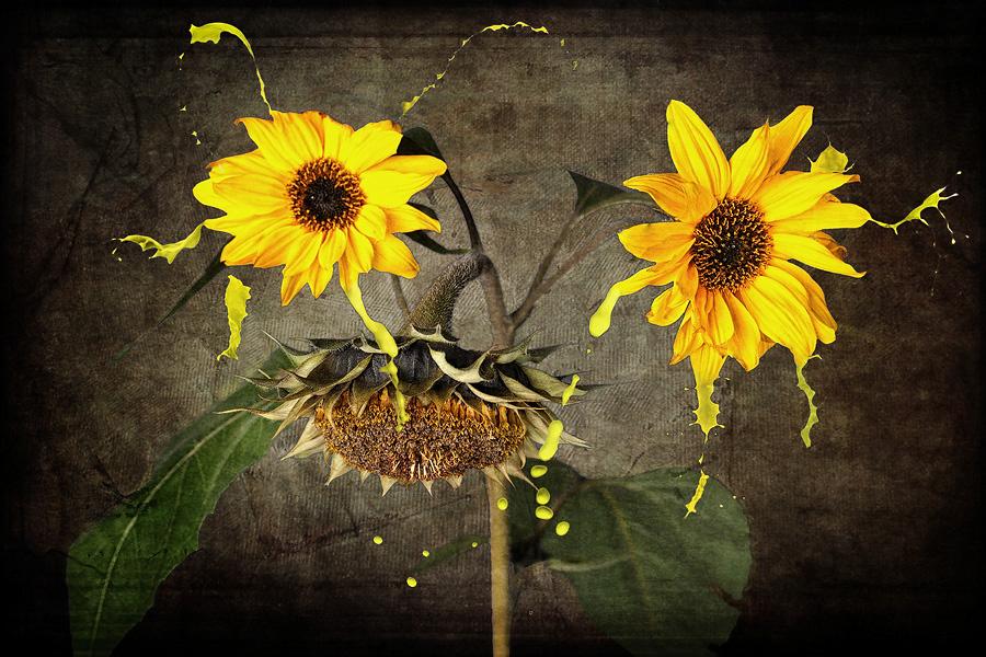 Sonnenblumen-Splash