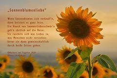 Sonnenblumenliebe!