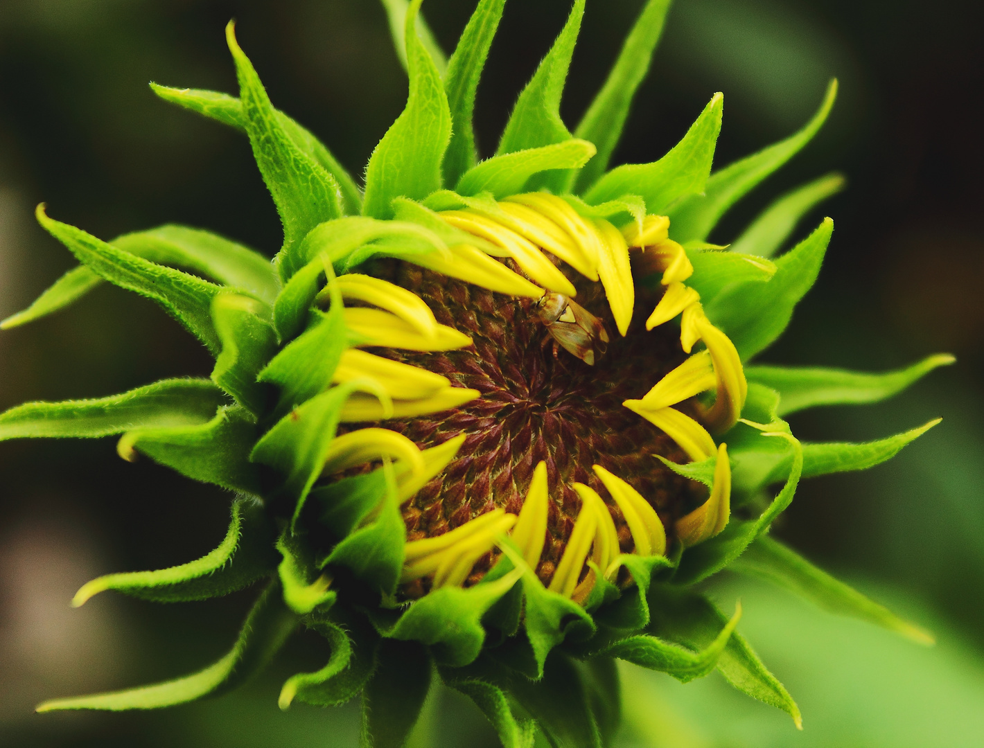 Sonnen[Blumen]schutz mal anders