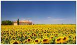 Sonnenblumige Provence von Stefan Crass