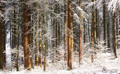 Sonnendurchfluteter Winterwald