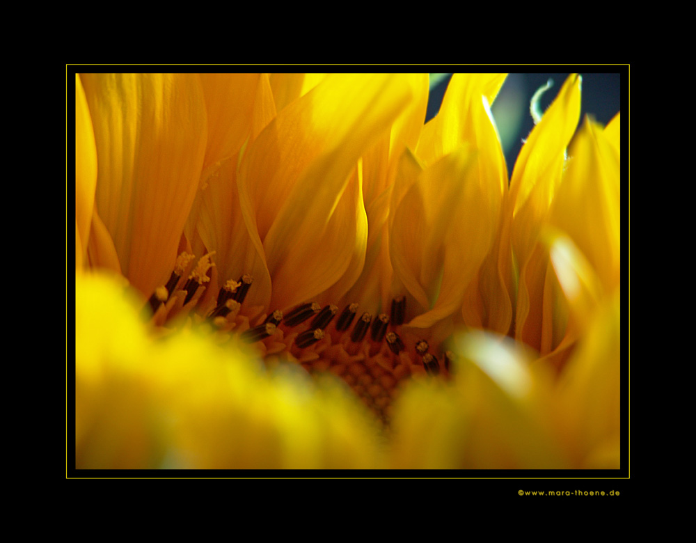 Sonnenflammen