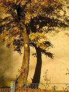 Sonnenflash im Herbst