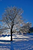 Sonnenfrost