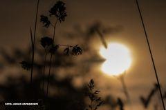 Sonnenherz