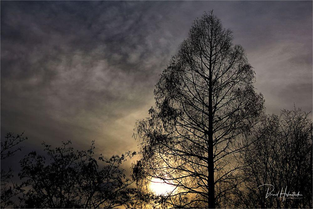 Sonnenlicht im Dezember ....
