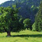 Sonnenlicht und Bäume