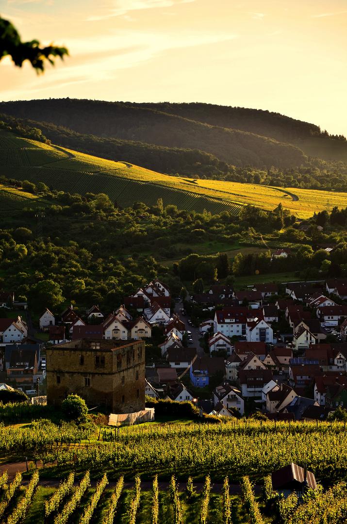 Sonnenlicht & Wineberge