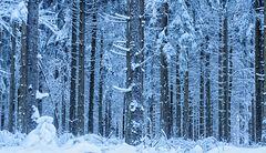sonnenlose Zeiten im Wald