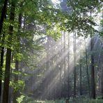 Sonnennebel im Odenwald