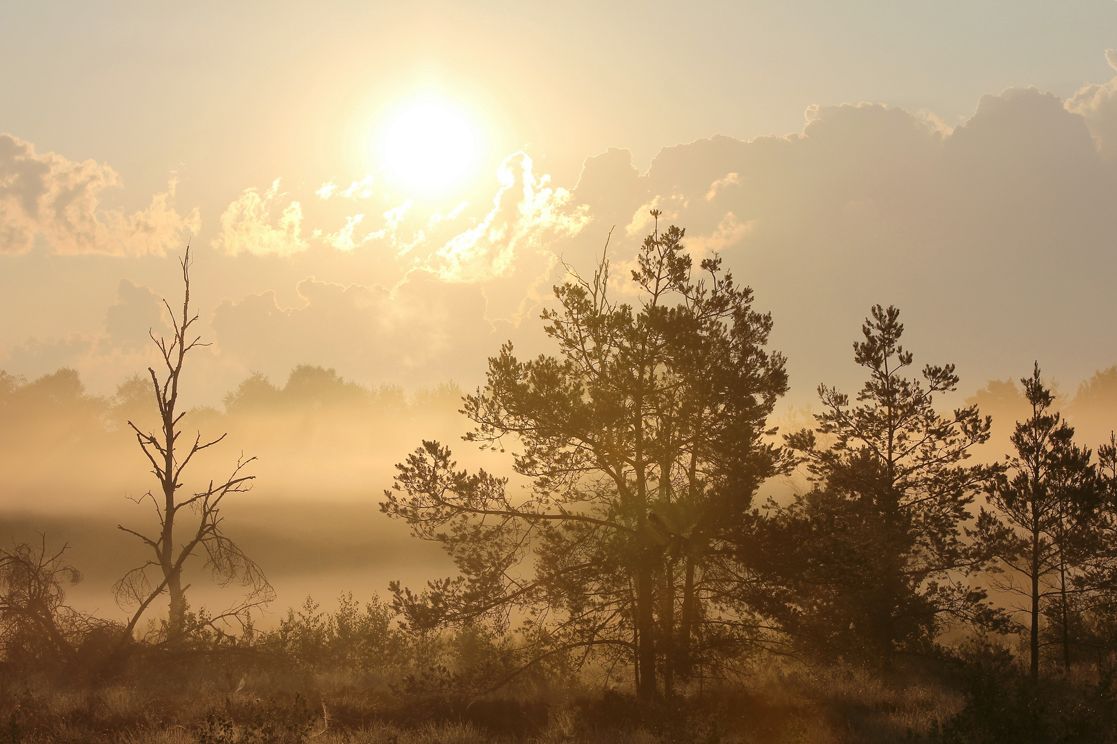 Sonnenqaufgang im Bad Wurzacher Ried 3