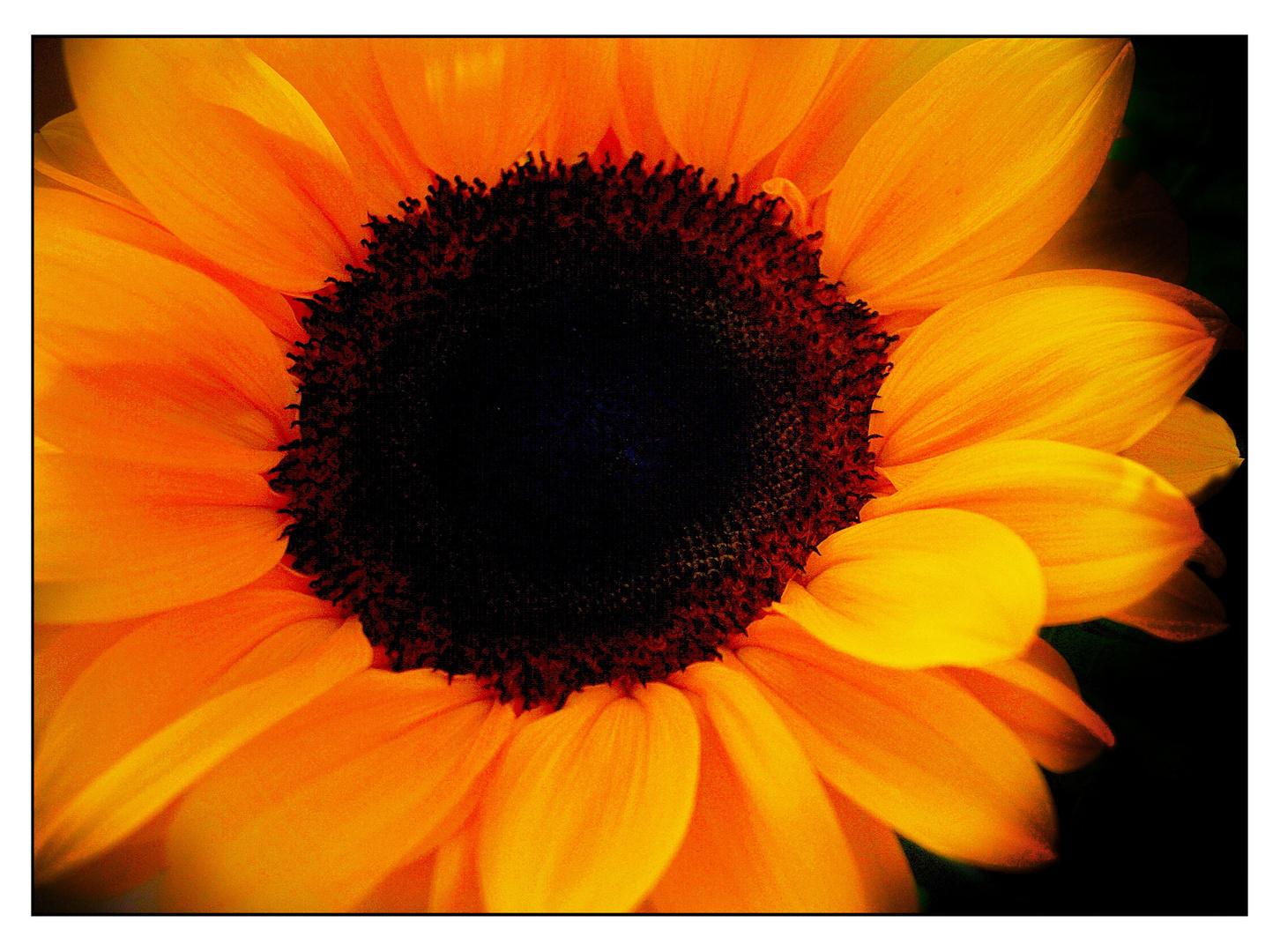 Sonnenschein Bilder